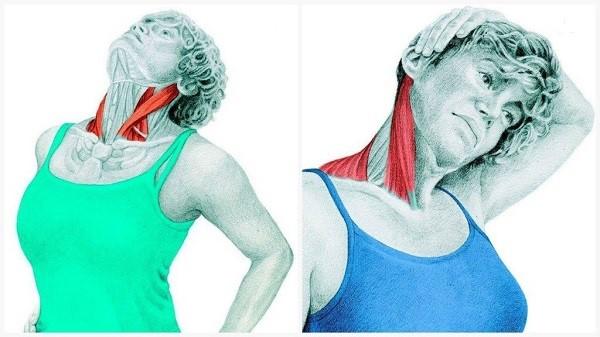 انعطاف عضلات